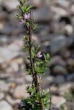 Одичалые фиолетовые цветки внутри перед Стоковое Изображение
