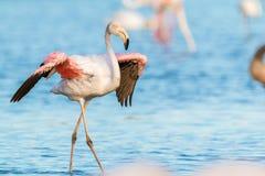 Одичалые фламинго в Франции стоковые изображения