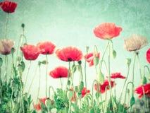 Одичалые цветки мака на луге лета вектор детального чертежа предпосылки флористический Стоковое Изображение