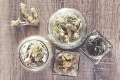 Одичалые чай и травы горы Стоковое Изображение