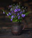 Одичалые Bluebells Стоковое фото RF