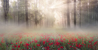Одичалые Daffodils Стоковые Фото