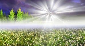 Одичалые Daffodils Стоковое фото RF