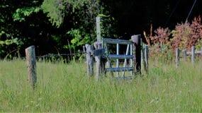 Одичалые floweres в поле Стоковое Изображение RF