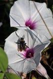 Одичалые floweres в поле Стоковые Изображения RF