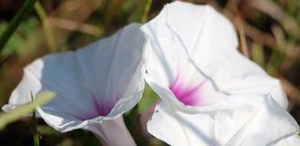 Одичалые floweres в поле Стоковое Изображение