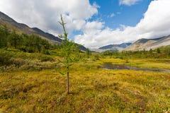 Одичалый ландшафт в горах Ural. Стоковые Изображения