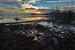 Одичалый берег озера Стоковые Изображения