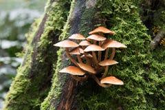 Одичалый гриб в водопаде Нельсона Стоковая Фотография RF