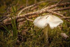 Одичалый гриб в подлеске Стоковые Изображения RF