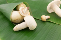 Одичалый гриб на лист банана Стоковое Изображение