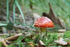 Одичалый гриб на солнечный день осени Стоковые Фотографии RF