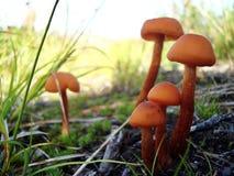 Одичалый гриб Стоковое фото RF