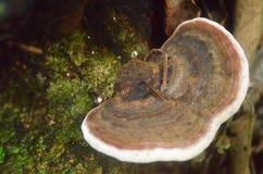 Одичалый гриб Стоковые Фото