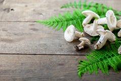 Одичалый гриб champinions Стоковое Фото