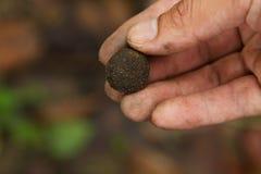 Одичалый гриб Hed Thop Стоковая Фотография RF