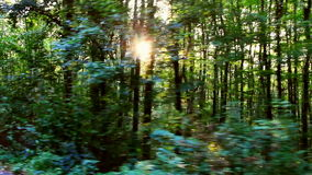 Одичалый лес Балканов в движении сток-видео