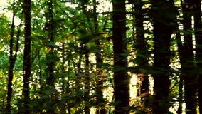 Одичалый лес Балканов в движении видеоматериал