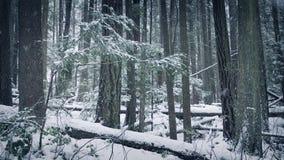 Одичалый лес в снеге видеоматериал