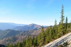 Одичалый лес на peakin горы восточные Карпаты, ресервирование Piatra Craiului естественное, Румыния Стоковая Фотография