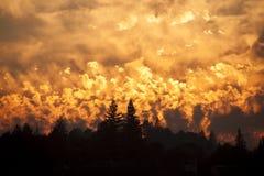 Одичалый лес с горением любит заход солнца стоковое фото rf