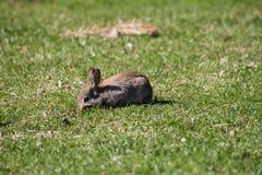 Одичалый зайчик сидя в траве стоковое изображение rf