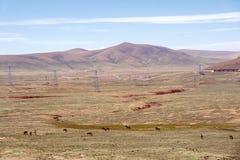 Одичалый ишак в горе Стоковые Фото