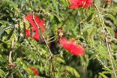 Одичалый красный цвет цветет трава предпосылки зеленая Стоковая Фотография RF
