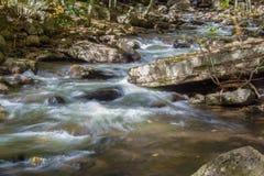 Одичалый поток форели горы Стоковые Фото