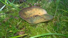 Одичалый поход амфитеатра каскада грибов Стоковое Изображение RF