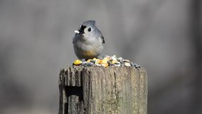 Одичалый подавать птиц сток-видео