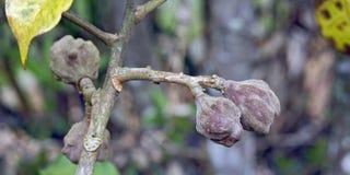 Одичалый плодоовощ в лесе Стоковая Фотография RF