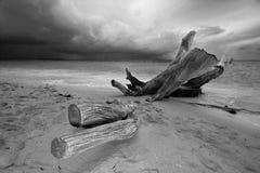 Одичалый пляж Стоковые Фотографии RF