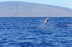 Одичалый скакать дельфина Стоковые Изображения