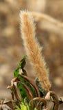 Одичалый цветок засорителя Стоковые Фотографии RF