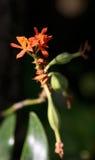 Одичалый цветок засорителя Стоковая Фотография