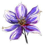 Одичалый цветок clematis иллюстратор иллюстрации руки чертежа угля щетки нарисованный как взгляд делает пастель к традиционному Стоковые Изображения RF