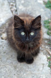 Одичалый черный котенок Стоковые Изображения