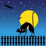 Одичалый черный кот силуэта Стоковые Изображения