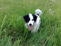 Одичалый doggy Стоковое Изображение RF