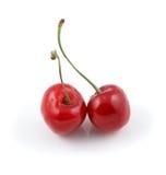 2 одичалых вишни изолированной на белизне Стоковое Фото