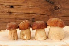4 одичалых гриба porcini стоя в ряд на wi деревянной доски Стоковое фото RF