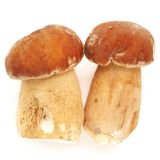2 одичалых изолированного гриба porcini (подосиновик edulis) Стоковые Изображения RF
