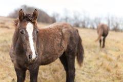 2 одичалых лошади Стоковое фото RF