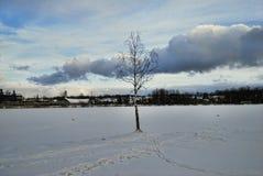 Одна береза в зиме на день озера солнечный Стоковое фото RF