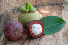 одна белизна стойки мангустана плодоовощ предпосылки Стоковое фото RF