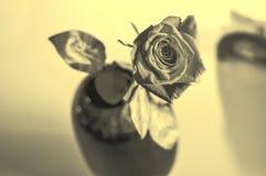 Одна влажная красная роза в вазе в запачканной белой предпосылке Объектив селективного фокуса производит эффект тонизированный se Стоковое фото RF