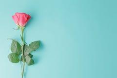 Одна влажная красная роза изолированная на предпосылке аквамарина Стоковое Изображение