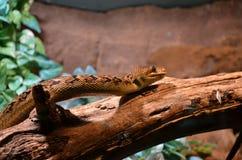 Одна коричневая змейка Стоковое фото RF