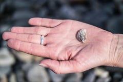 Одна красивая раковина clam на женской ладони Стоковая Фотография
